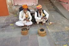 magiczne Indie kobry